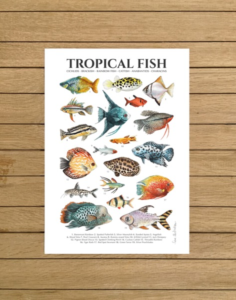 Tropical Fish Poster Lore Illustration